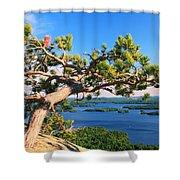 Windswept Pine On Rattlesnake Mountain Shower Curtain