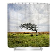 Windswept Tree Shower Curtain
