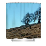 Windswept Trees - December 7 2016 Shower Curtain by D K Wall