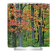 Windy Day Autumn Colors Shower Curtain