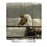 Windy In Mane Shower Curtain