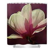 Wine And Cream Magnolia Blossom Shower Curtain