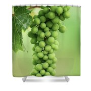 Wine Before Picture Shower Curtain