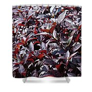 Wine Colored Plants,  Shower Curtain
