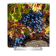 Wine Grapes Napa Valley Shower Curtain by Garry Gay
