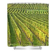 Wine Growing Shower Curtain