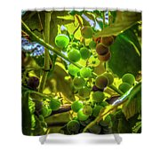 Wine On The Vine Shower Curtain