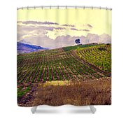 Wine Vineyard In Sicily Shower Curtain