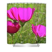 Winecup Flowers In Sunlight Shower Curtain