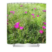 Winecup Flowers Shower Curtain