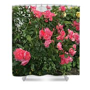 Winery Roses  Shower Curtain