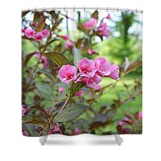 Wines And Rose Weigela Shower Curtain