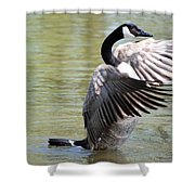 Wing Drying Shower Curtain