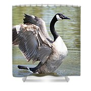 Wing Flapping Shower Curtain