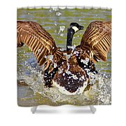 Wing Spand Shower Curtain