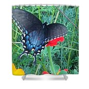 Wing Spread Butterfly Shower Curtain