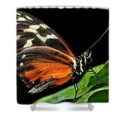 Wing Texture Of Eueides Isabella Longwing Butterfly On A Leaf Ag Shower Curtain