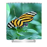 Wing Wonders Shower Curtain