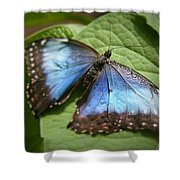 Wingdrops Shower Curtain