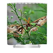 Wings 2 Shower Curtain