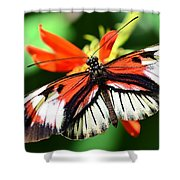 Wings 9 Shower Curtain