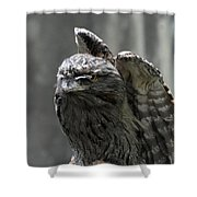 Wings Above A Tawny Frogmouth That Looks Interesting Shower Curtain