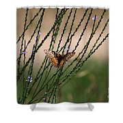 Wings Aglow  Shower Curtain