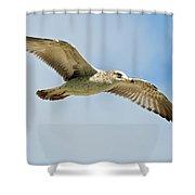 Wings Aloft Shower Curtain