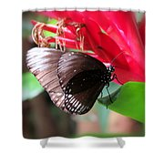 Wings Of Brown - Butterfly Shower Curtain
