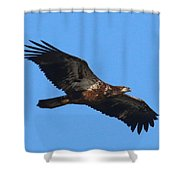 Wings Of Eagles Shower Curtain