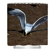 Wings Of Fury Shower Curtain