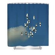 Wings Of White Shower Curtain