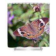 Wings Of Wonder - Common Buckeye Butterfly Shower Curtain