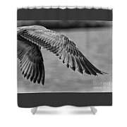 Wings Over Water Beach Pictures Black And White Seagull Shower Curtain