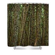Winner Creek Trail Shower Curtain