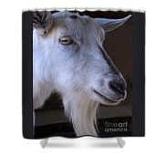 Winsome Goat Shower Curtain