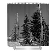 Winter Alpine Trees, Mount Rainier National Park, Washington, 2016 Shower Curtain