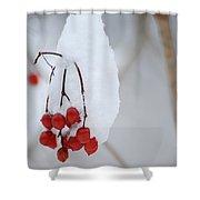 Winter Berries Shower Curtain