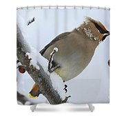 Winter Berry Treat Shower Curtain