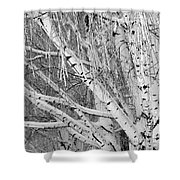 Icy Winter Birch Tree  Shower Curtain