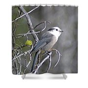 Winter Bird  Shower Curtain