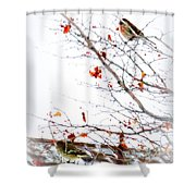 Winter Birds 1 Shower Curtain