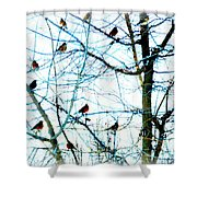 Winter Birds 2 Shower Curtain