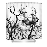 Winter... Black And White Shower Curtain