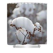 Winter Bloom Shower Curtain