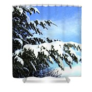 Winter Boughs Shower Curtain