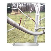 Winter Bud Shower Curtain
