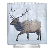 Winter Bull Shower Curtain by Mike  Dawson