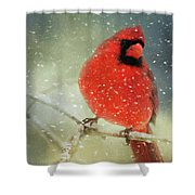 Winter Card Shower Curtain