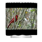 Winter Cardinal Sits On Tree Branch Shower Curtain